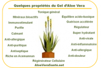 Aloe vera ses proprietes ses benefices aloeverasante en usage interne anti inflammatoire antiseptique hemostatique antalgique apaisant immunisant antib