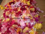 Petales de roses 300x225